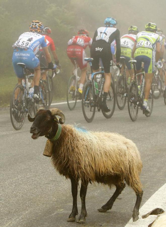 El pelot�n tuvo que frenar durante un momento de la etapa porque un reba�o de ovejas se cruz� en el camino demostrando que nadie quer�a perderse la etapa.