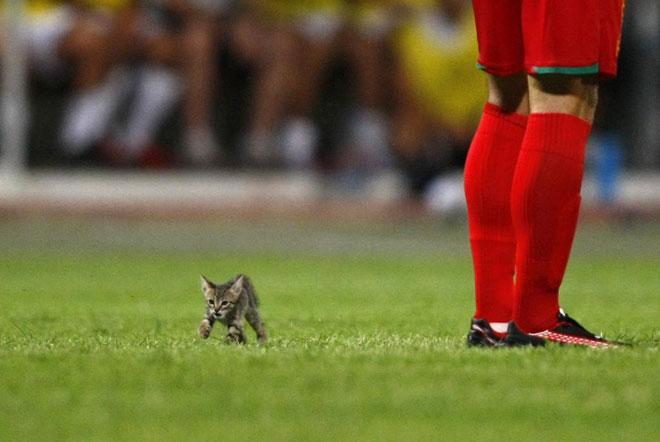 Un pequeño gatito se coló en el terreno de juego durante la disputa de la final de la Supercopa de Malta entre el Birkirkara y el Valletta.