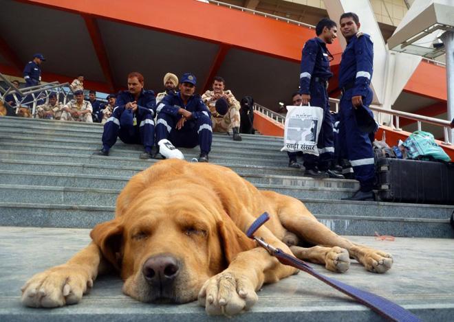 Un perro especializado en detectar explosivos se toma un descanso en las puertas del estadio Jawaharlal Nehru en el que se disputar�n los Juegos de la Commonwealth.