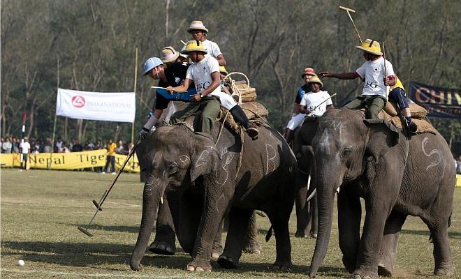 La ciudad nepal� de Meghauly acogi� la 29 edici�n de la International Elephant Polo.