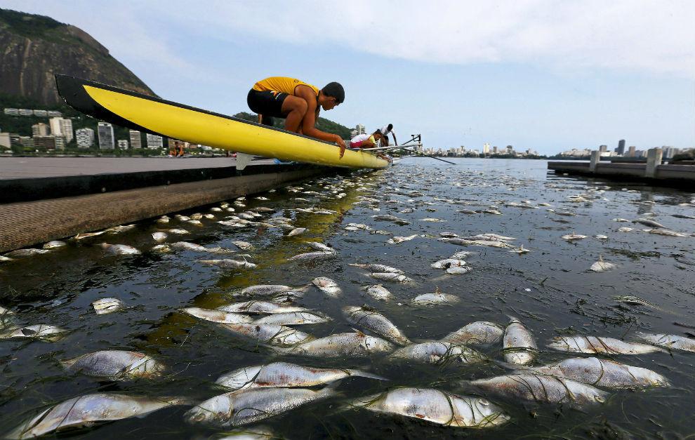 Una imagen de la laguna de Río repleta de peces muertos.