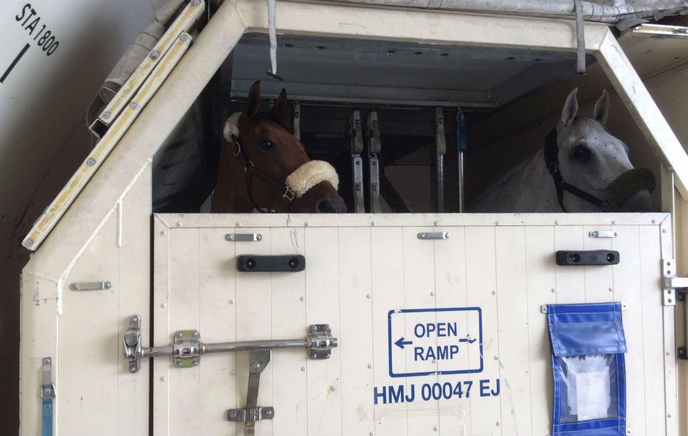 'Hito', el caballo de Albert Hermoso para el concurso completo, en el...