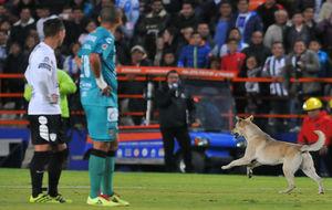 El perro que interrumpió el juego en el Estadio Hidalgo.