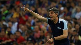 Pellegrino, durante la final de Copa del Rey.