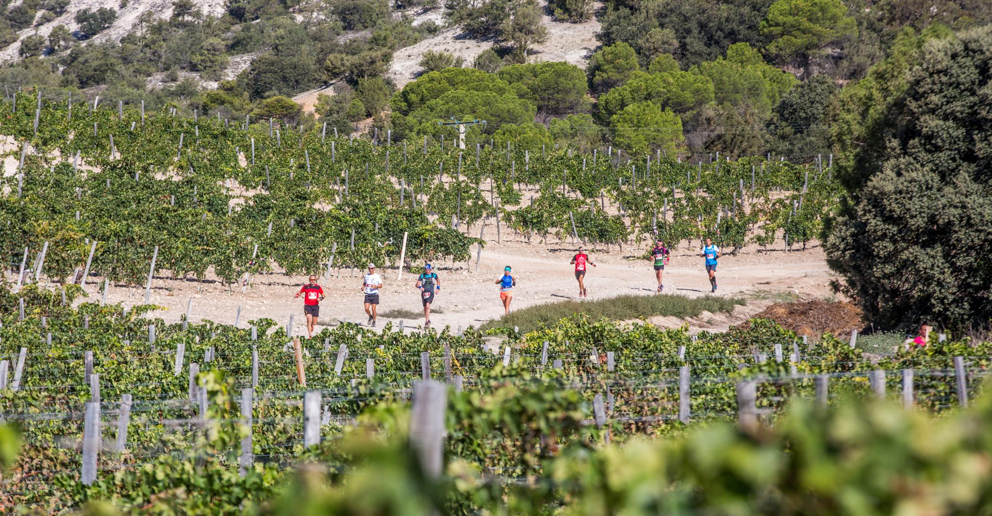 Varios corredores en un tramo del recorrido entre viñedos.