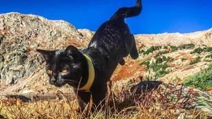 Simon es un gato de 17 meses que ha vivido aventuras y escalado...