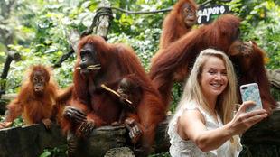 Svitolina, en el zoo de Singapur