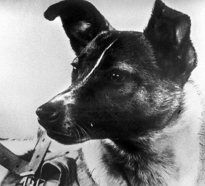 Laika, el primer ser viviente en llegar a a la órbita terrestre