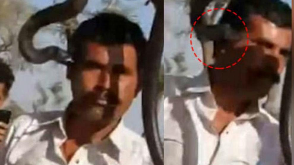 Se sacó una foto junto a una cobra y murió por la mordedura del animal.