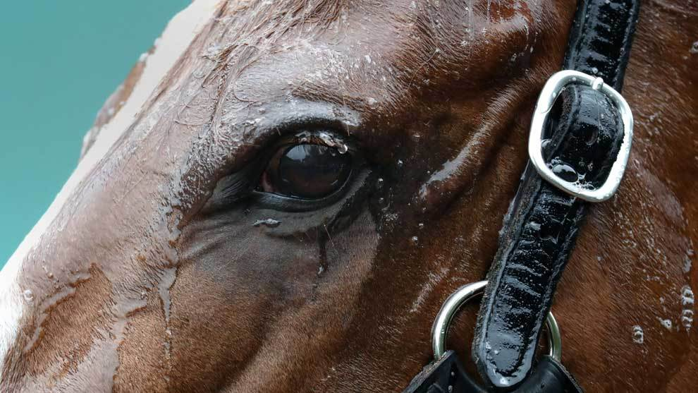 Justify, el ganador del Derby de Kentucky, se