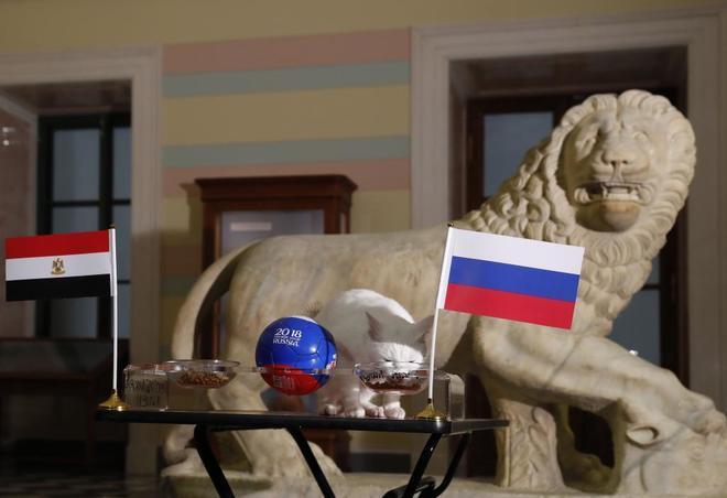 El gato Achilles se ha decantado por Rusia para este partido.
