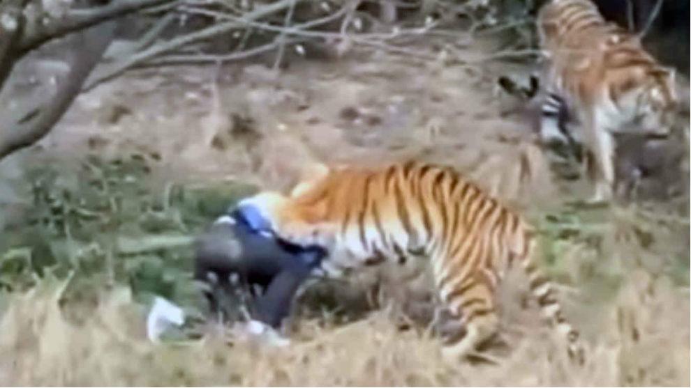 Un hombre trepó la valla de un zoológico con el fin de entrar gratis...