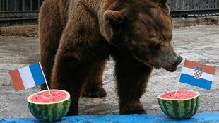 Buyan, un oso pardo macho de Siberia se inclina por Croacia para...