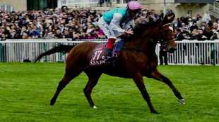 'Enable', la gran favorita.