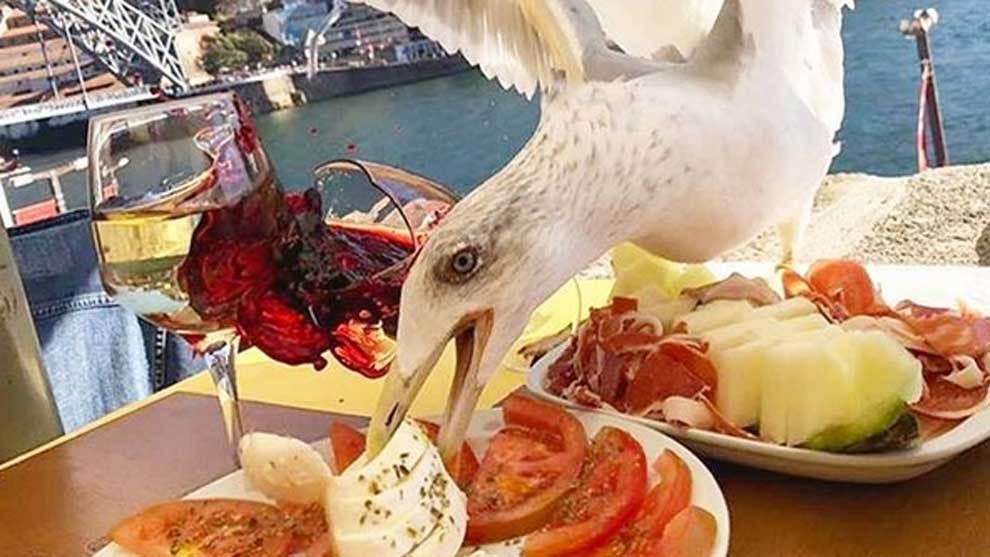 Una gaviota atacando la comida de Iker Casillas en un restaurante de...