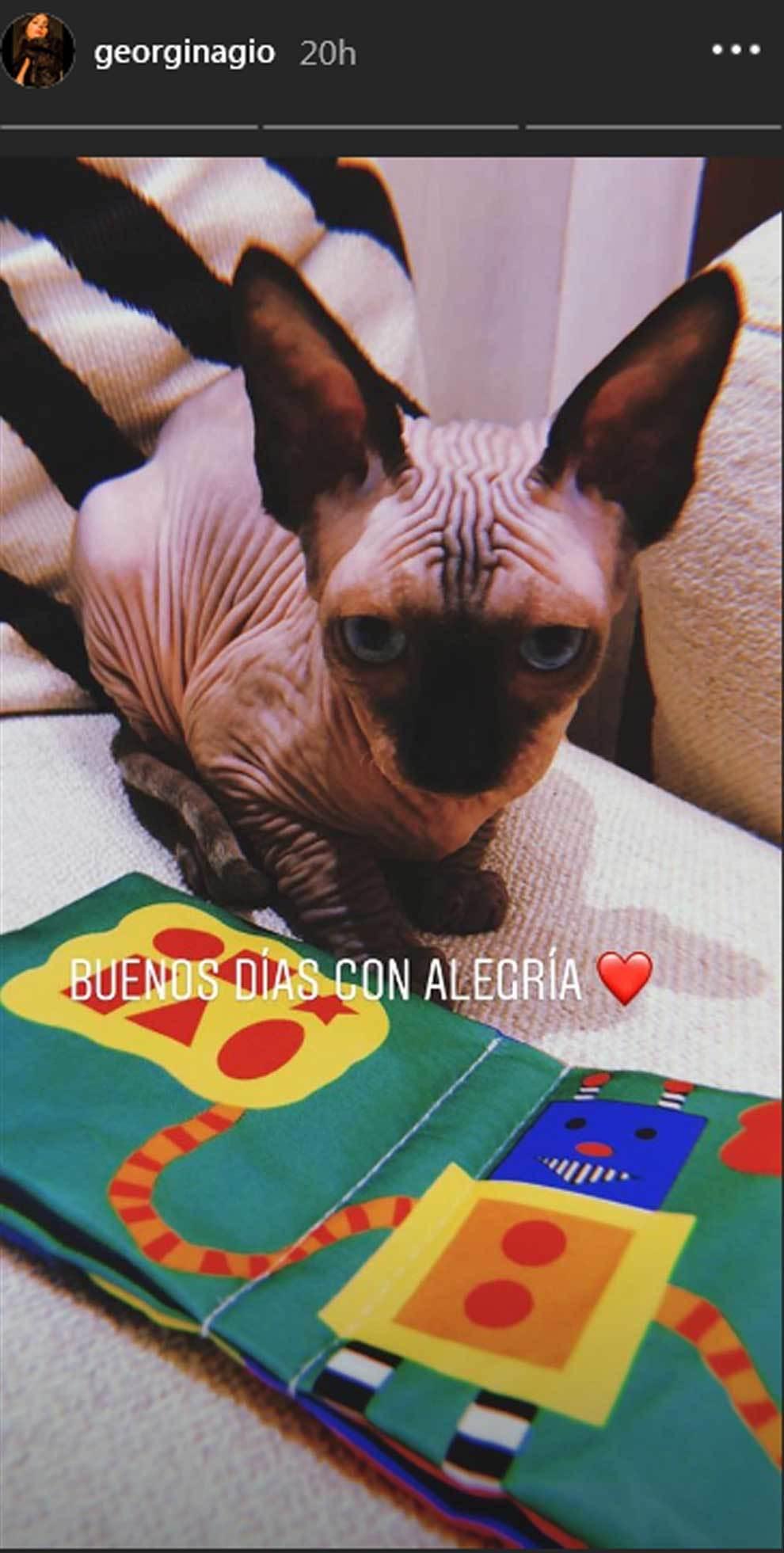 Un sphynx, o gato, esfinge, es la nueva mascota de Georgina Rodríguez...