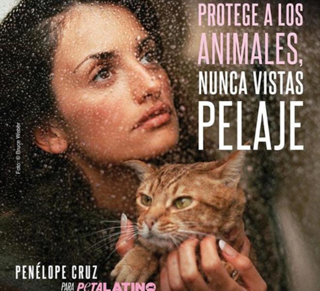 'Tomar el toro por los cuernos', las frases que PETA quiere eliminar