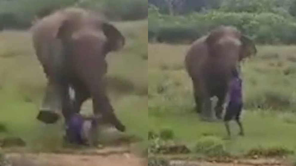 #Video Elefante mata a hombre que trataba hipnotizarlo