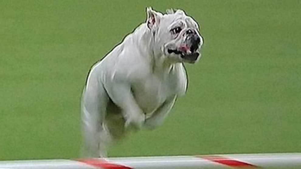 Un border collie de nombre Verb ganó el Concurso de agilidad de la...
