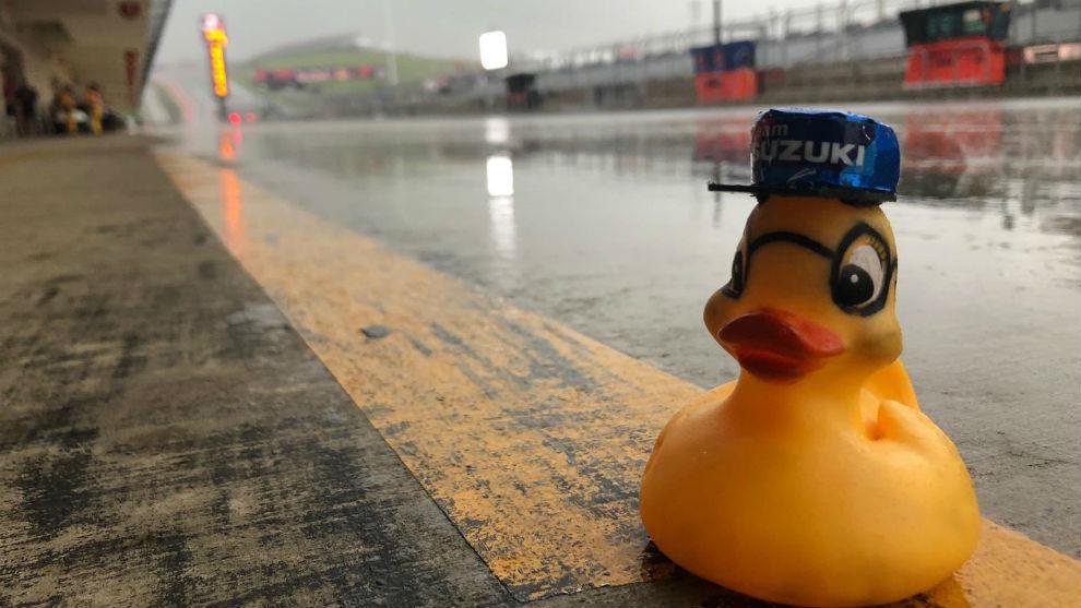 El pato de goma de Suzuki en el circuito de las Américas.