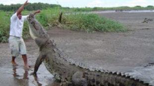Imagen de archivo de un ataque de un cocodrilo