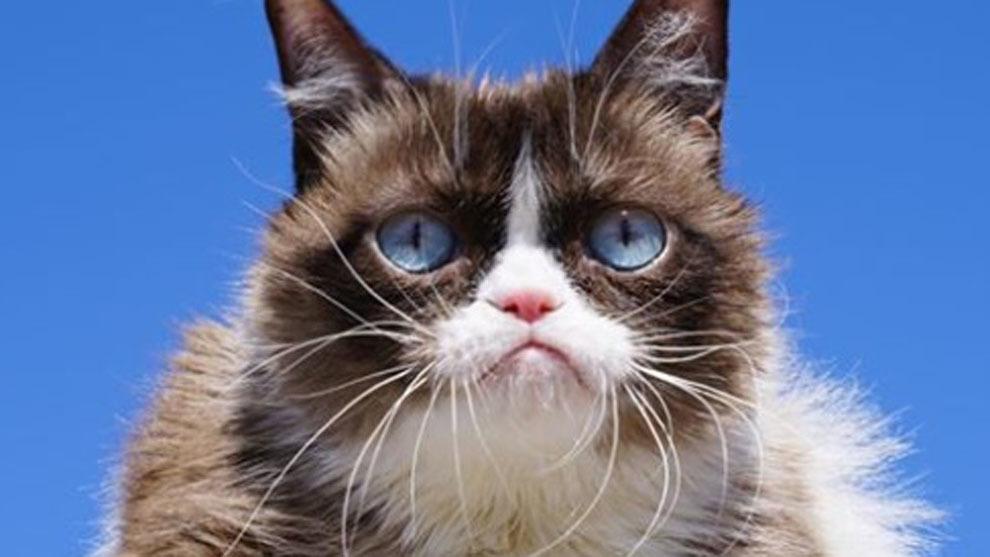 'Grumpy Cat', el gato gruñón