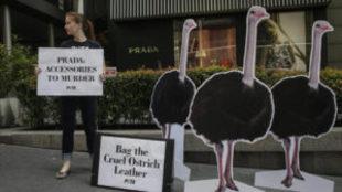 Prada anuncia que dejará de emplear pieles de animales en 2020