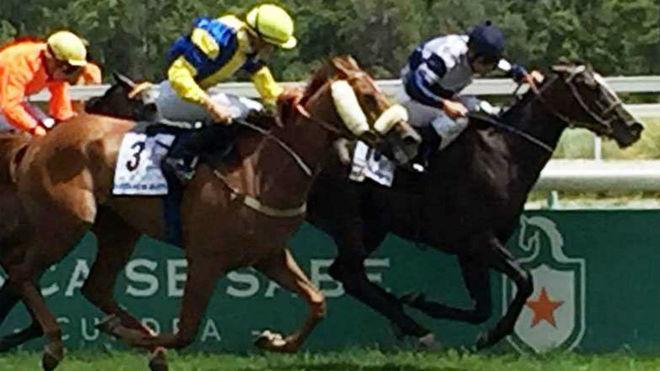 Zascandil se impuso a Hipodamo de Mileto, en el  GPM2018