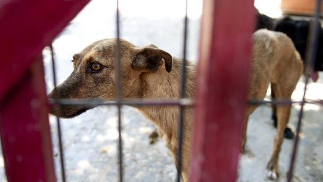 Imagen de archivo de un perro en una perrera.
