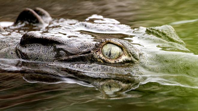 Un cocodrilo ha acabado con la vida de un niño de 10 años en...