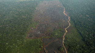 Imagen del Amazonas