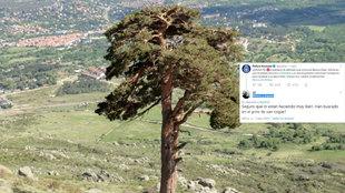 Pino de San Roque lugar dónde ha sido localizado el cuerpo de Blanca...