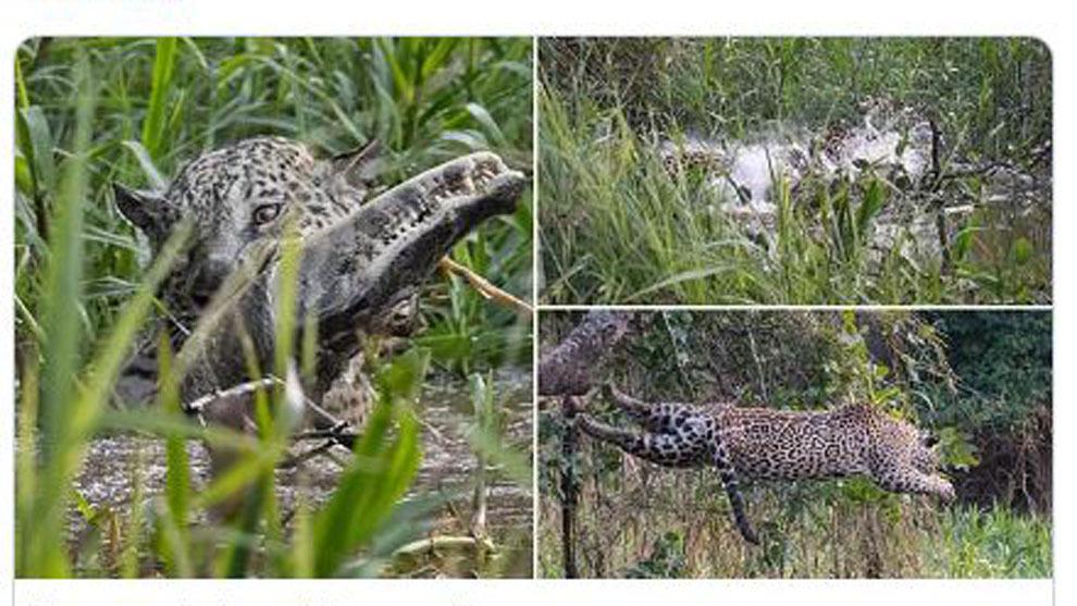 El fotógrafo Kevin Dooley capturó el momento en el que el animal...