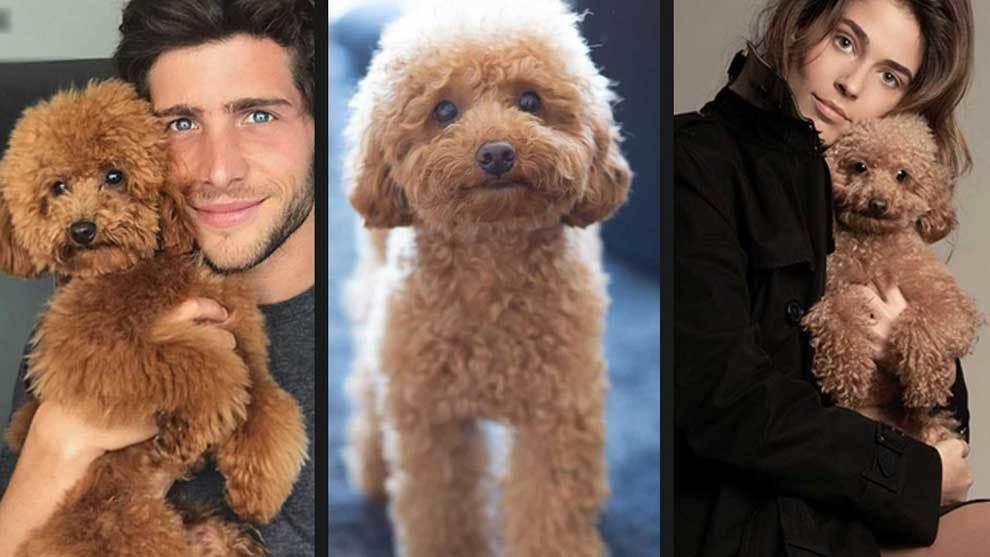 Baloo, the dog of Barcelona player Sergi Roberto and his model...