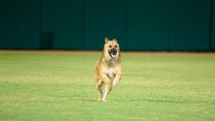 Perro irrumpe en el campo durante el Charro vs Carroñeros