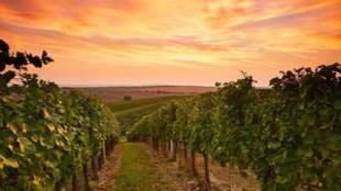 Aranda de Duero, elegida Ciudad Europea del Vino 2020