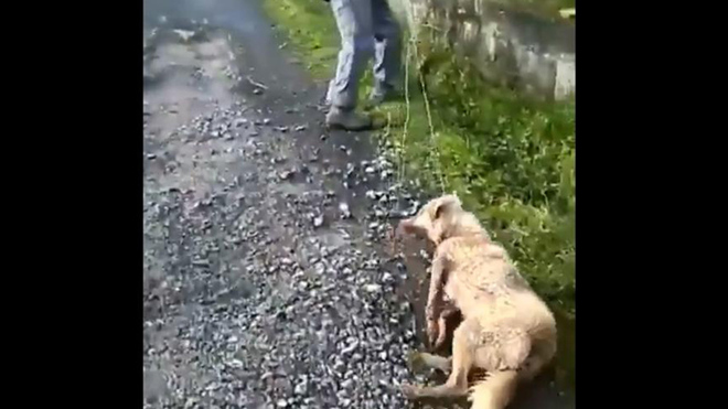 Un cazador dispara y arrastra a su propia perra.