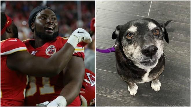 Conmovedor gesto de un campeón del Super Bowl con perros y gatos