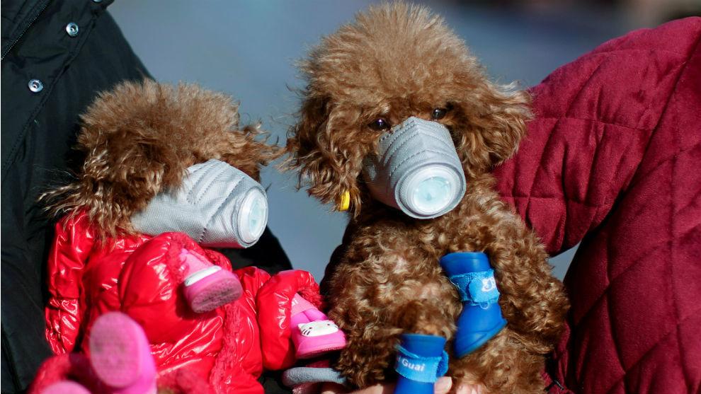 Así protegen a los perros en China   Reuters