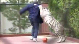 El exboxeador Mike Tyson jugando con su tigre de bengala Kenia