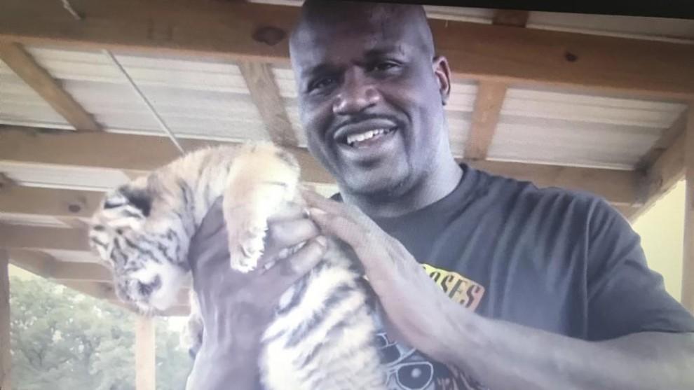 Shaquille posa con un cachorro de tigre en un momento del programa Joe...