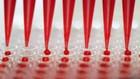 Test de anticuerpos para el coronavirus: clave para hacerse con el certificado sanitario