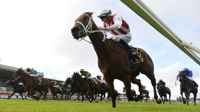Varios caballos corren en Australia