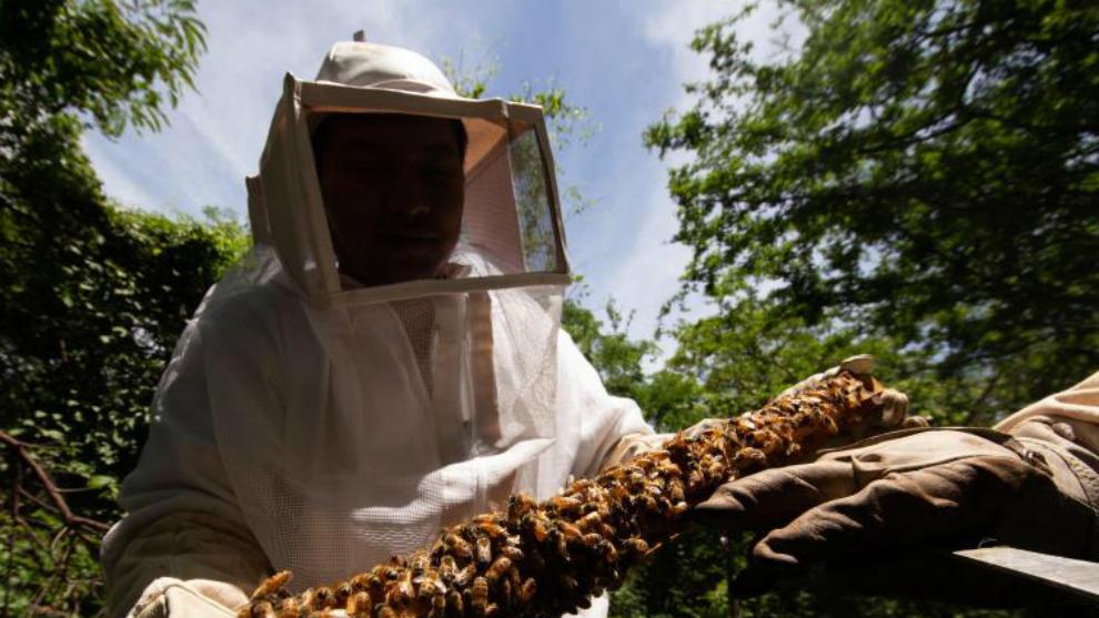 Man dies in Spain from Asian giant hornet sting
