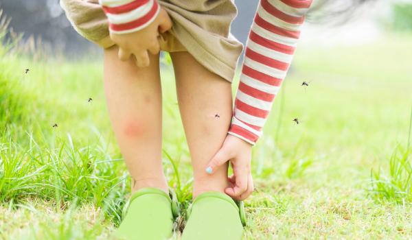 Raquetas electrificadas y otros diez aparatos para combatir en tu casa o tu jardín la epidemia de mosquitos