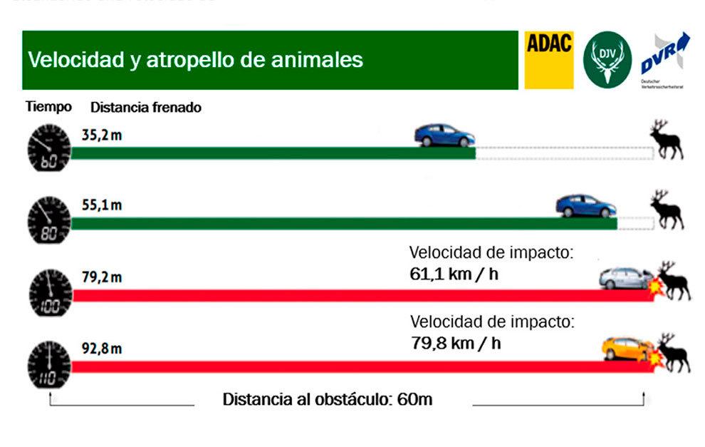 Sólo unos km/h de más menos pueden hacer que evitemos el atropello.