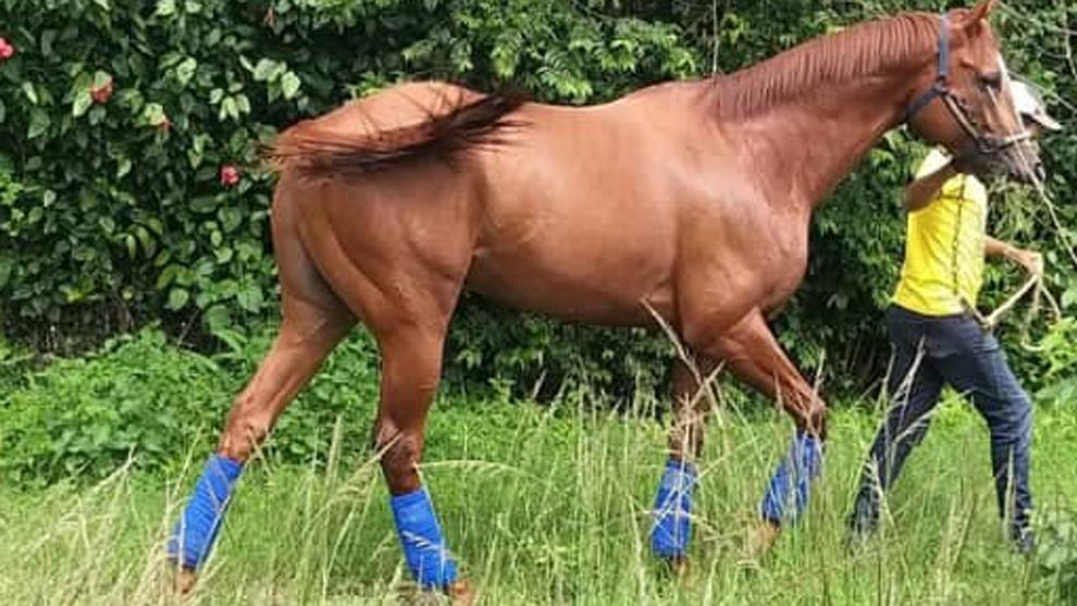 Turf: Roban del hipódromo, descuartizan y se comen a un caballo ...