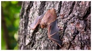 Los fluidos de los murciélagos son las causas del contagio.