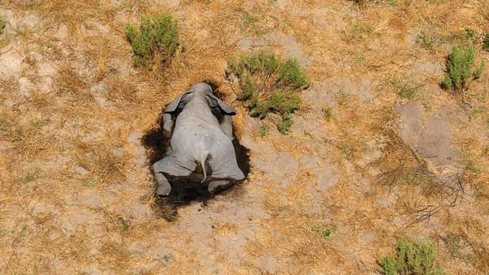 Cientos de elefantes han sido hallados muertos en Botswana.