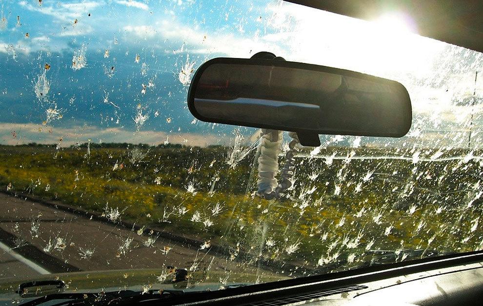 Los insectos impiden de forma especial la visibilidad.